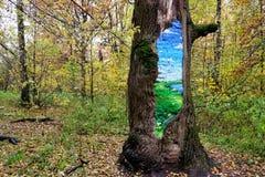 在一个补丁的图片在树的树干 库存图片