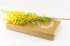 在一个被包裹的礼物的含羞草pudica 免版税库存照片