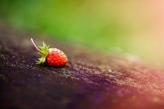 在一个被弄脏的森林的偏僻的美丽,红色野草莓,绿色背景 森林,与光束的抽象背景 库存照片