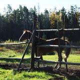 在一个被操刀的领域的幼小马 在美丽的鸟云彩之上颜色及早飞行金子早晨本质宜人的平静的反映上升海运一些星期日 库存照片