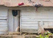 在一个被毁坏的房子的门的猫在Munnar,喀拉拉,印度 免版税库存照片
