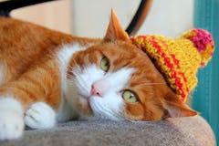 在一个被编织的帽子的逗人喜爱的猫 免版税库存照片