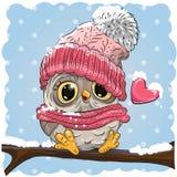 在一个被编织的盖帽的猫头鹰 免版税库存图片