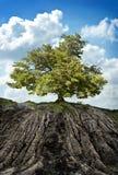 在山的树 免版税库存照片