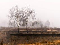 在一个被风化的峡谷外缘与黄色草,在分支,有薄雾的晚秋天早晨的一只鸟的两个光秃的桦树 图库摄影
