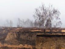 在一个被风化的峡谷外缘与黄色草,在分支,有薄雾的晚秋天早晨的一只鸟的两个光秃的桦树 库存图片