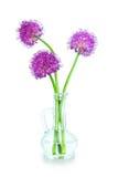 在一个装饰瓶的三朵紫色葱属花 免版税库存图片