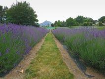 在一个角色的淡紫色领域有山背景,新西兰 库存图片