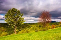 在一个象草的倾斜的两棵树春天 库存图片