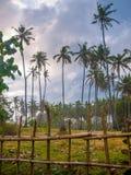 在一个象草的领域的棕榈树 免版税库存图片