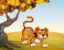 在一个跳跃的位置的一只老虎在大树附近 免版税库存图片