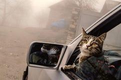 在一个车窗外面的顶头猫在冬天有雾的时间 阿塞拜疆旅行的猫Linza 库存图片