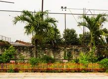 在一个运动场附近的棕榈树与在三宝垄拍的砖墙照片印度尼西亚 免版税库存图片