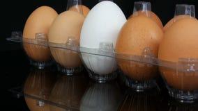 在一个透明塑料盘子的大棕色和一只白色鸡鸡蛋在白色背景 股票视频