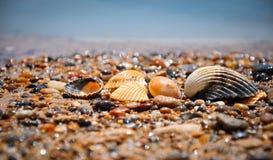 在一个通配海滩(西西里岛,意大利)的壳 免版税库存图片