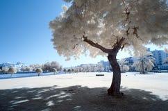 在一个部分与金黄叶子-冒充的颜色红外线的树 免版税库存照片