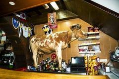 在一个酒吧的母牛在Camara de罗伯斯是一个渔村在市丰沙尔附近并且有某些最高的峭壁在世界上 图库摄影