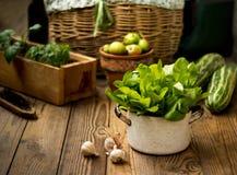 在一个金属平底锅的绿色新鲜的散叶莴苣在木背景 库存图片