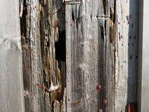 在一个钓鱼的大厦的板条墙壁在挪威 免版税库存照片