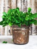 在一个铜罐的绿色新鲜薄荷 免版税库存图片