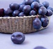 在一个银色篮子的黑葡萄在灰色背景 库存照片