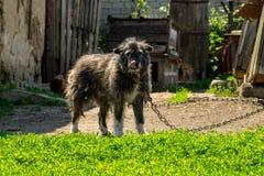 在一个链子的杂种狗在村庄守卫宅基的 免版税图库摄影