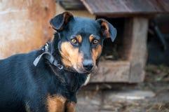 在一个链子的狗在村庄守卫宅基的 库存照片