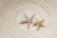 在一个镶边背景木圈子的两个海星 温暖的口气 库存图片