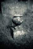 在一个长得太大的坟墓的老罐 免版税库存照片