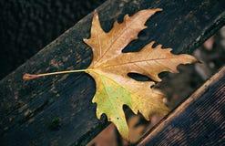 在一个长木凳下落的枫叶秋天 库存图片