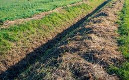 在一个长的平直的垄沟旁边的被割的和干草在早平均观测距离 免版税库存图片