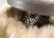 在一个陈腐的箱子或手提箱的小猫 免版税库存照片