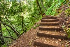 在一个陡坡的步在森林区域 免版税库存照片