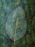 在一个陶瓷花瓶的叶子静脉 库存图片