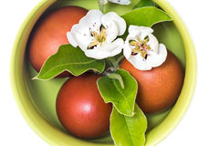 在一个陶瓷花瓶的复活节彩蛋在白色背景 图库摄影