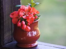 在一个陶瓷花瓶的小明亮的花束 库存图片