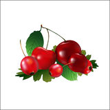 在一个集合的成熟樱桃与山楂树 免版税库存照片