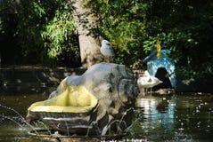 在一个雕象的大壳的一只海鸥与一个喷泉的在天鹅附近的一个湖在背景中 库存图片