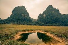 在一个领域的一个水坑在越南 图库摄影