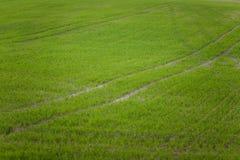 在一个领域的一个美好的绿色样式在春天 新的草行  图库摄影