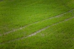 在一个领域的一个美好的绿色样式在春天 新的草行  库存照片