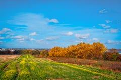 在一个领域的五颜六色的树在秋天 免版税图库摄影