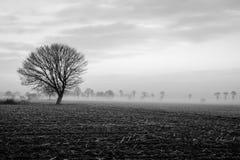在一个领域的偏僻的树与风雨如磐的天空 免版税库存照片