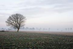 在一个领域的偏僻的树与风雨如磐的天空 免版税图库摄影