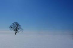 在一个领域的偏僻的树在冬天 免版税库存照片