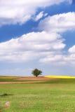 在一个领域的偏僻的树在小山 库存图片