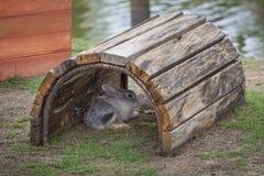 在一个领域的兔子在庭院里 库存图片