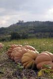 在一个领域的南瓜在Luberon的法国拉科斯特村庄附近 库存照片