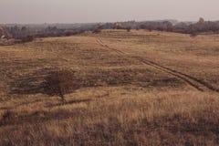 在一个领域的唯一树在秋天 库存照片