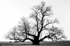 在一个领域的孤立光秃的树在秋天 免版税库存图片